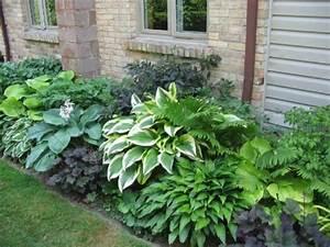 Schattenpflanzen Garten Winterhart : schattenpflanzen blumen f r den schattengarten ~ Lizthompson.info Haus und Dekorationen