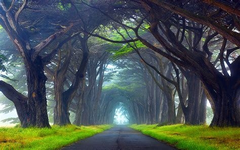 Nature Tunnel Of Trees Way Point Reyes National Seashore