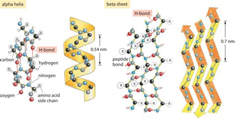 187 what is the energy of a hydrogen bond