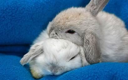Bunnies Sleeping Konijnen Wallpapers Achtergronden Rabbits Hugging