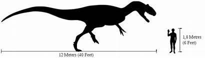 Allosaurus Human Comparison Svg Dinosaur Bones Lloyd