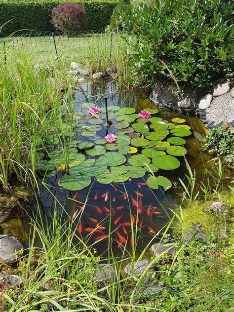 fische kleinanzeigen in n 252 rnberg bei deinetierwelt