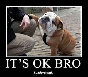 It s OK Bro Dog Humor