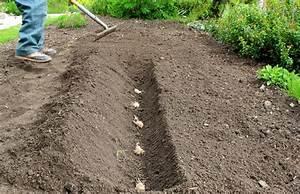 Was Kann Man Im August Noch Pflanzen : minifarming kartoffeln aus dem eigenen garten ~ Lizthompson.info Haus und Dekorationen