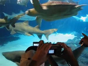 New York Aquarium, Coney Island, Brooklyn