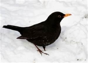 Vögel Füttern Ab Wann : v gel im winter wie berleben sie und wann sollten wir sie f ttern ~ Frokenaadalensverden.com Haus und Dekorationen