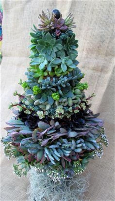 succulent christmas tree home design garden