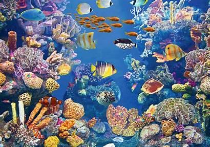 Sommer Lenticular Gmbh Coral Reef Zum Fische