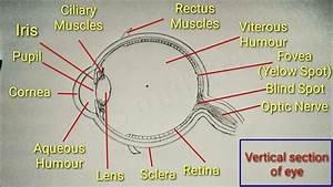 Eye Diagram With Easy Steps