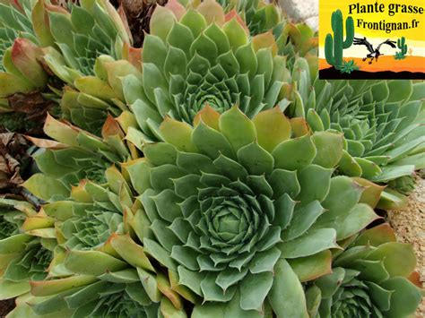 plante exterieur resistant au gel plante exterieur resistant au gel 28 images yucca agavac 233 es la palmeraie p 233 pini 232
