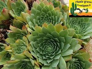 Plantes Grasses Extérieur : plantes grasses mediterraneennes ~ Dallasstarsshop.com Idées de Décoration