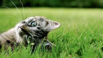 Cats Desktop Hdwallpaperfun