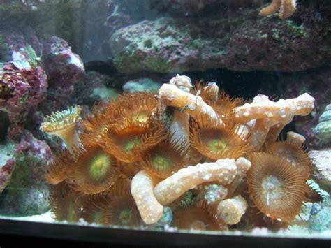 bernard l hermite aquarium recifal l aquarium r 233 cifal de niagaralex d 233 tritivores