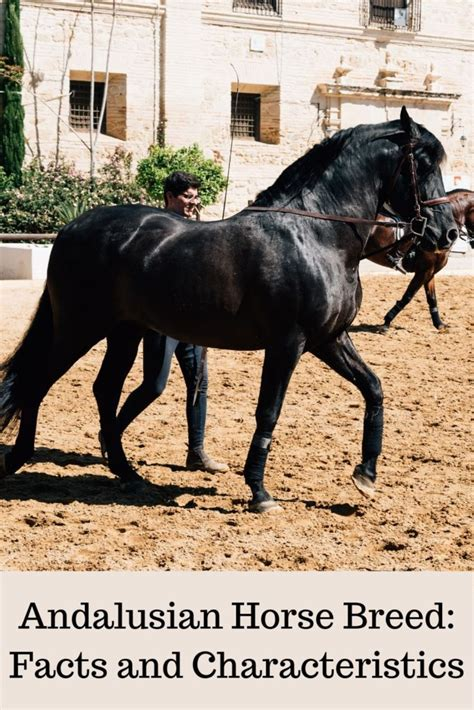 andalusian horse facts characteristics colors