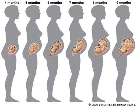 Gambar Janin 0 9 Bulan Milestones Of Pregnancy Fetus Article Trolly
