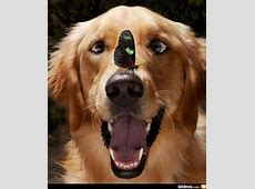 453 best Funny Pet Pics images on Pinterest Funny