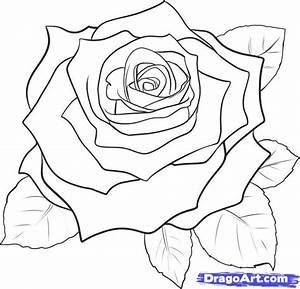 252 best Drawing Roses images on Pinterest | Drawing ...