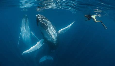 winning pictures   underwater photographer
