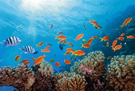 chambre d h e poissons exotiques et coraux papier peint fonds marins