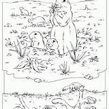 Coloring Prairie Dog Printable Printables Pages Freeprintable Dogs Recycle Sheets Fun sketch template