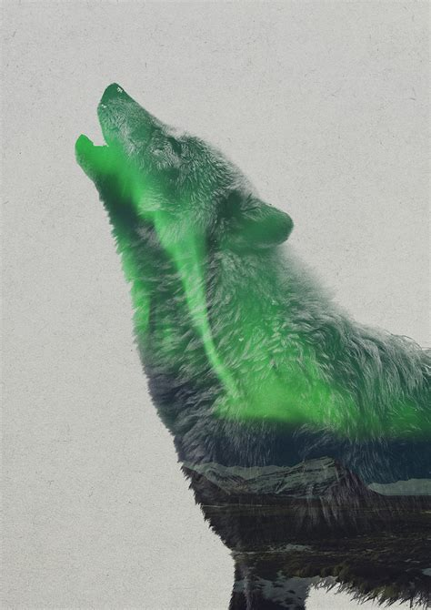 aurores boreales  animaux par andreas lie chambre