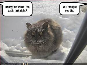 Funny Pictures: Very funny cat pictures funny captions and ...