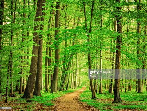 Green Forest Photo by Green Forest In Stock Photo Getty Images