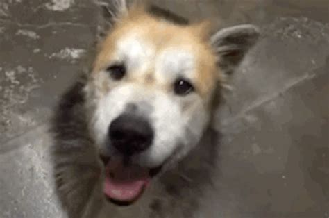 dogs dramatic transformation   rescued