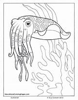 Coloring Ocean Cuttlefish Pages Sea Animal Fish Adults Adult Drawings Colouring Animals Sheets Printable Seashore Realistic Books Colorful Bing Preschoolers sketch template