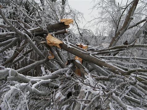 Storm Damage And Cleanup Tips