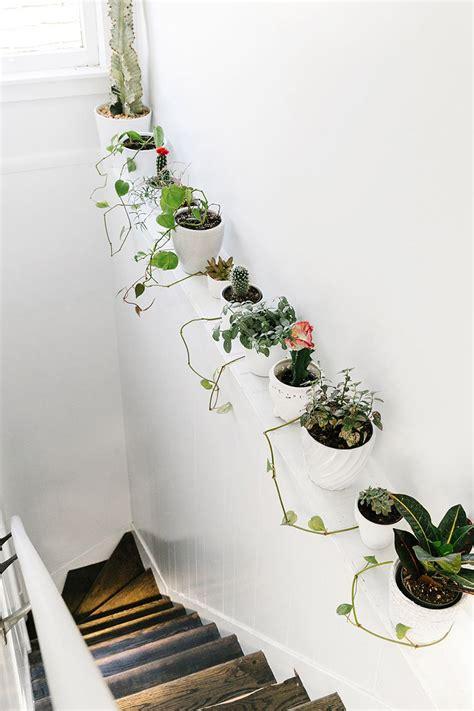 ideas  decorate  home  plants decordove