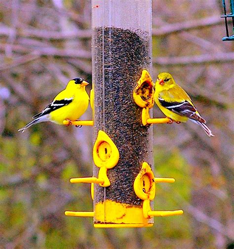 vibrant finches pentax user photo gallery
