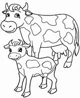 Cow Coloring Pages Cows Realistic Printable Adults Sheet Young Animals Adult Portrait sketch template