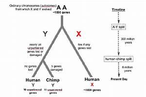 Gallery Xy Xx Chromosome