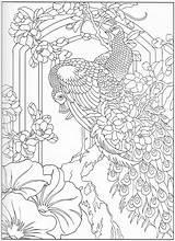 Coloring Peacock Adult Colouring Printable Peacocks Bird раскраски Sheets Dessin Paon Animal животными Stencils Spread sketch template