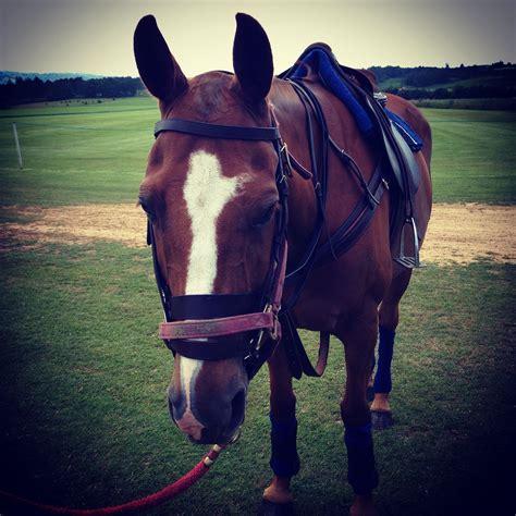 ponies polo pony