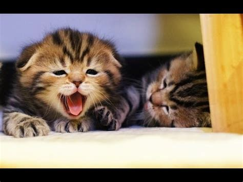 funny cats  cute kittens playing  funny kittens