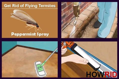 how to get rid of bugs in kitchen cabinets best 25 flying termites ideas on do termites 9905