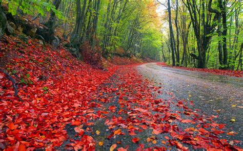 Autumn Rain Washed Wallpaper Nature #9301 Wallpaper