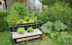 Raise Plants And Fish Together With Aquaponics