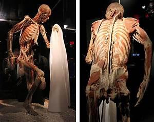 Photos  Body Worlds Vital Opens At Faneuil Hall Marketplace In Boston  U2013 Boston Magazine