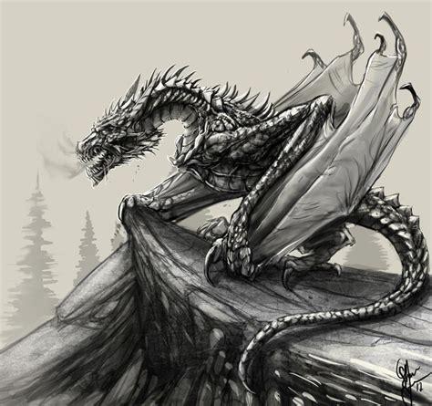 dragon sketch  shanetyreeartdeviantartcom