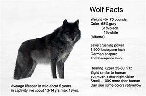 Canadian Wolf Size