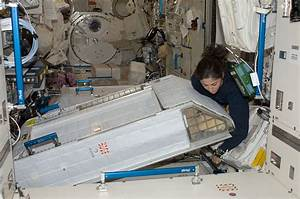 File:ISS-20 Nicole Stott with her crew quarters ...