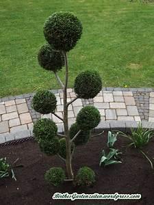 Buchsbaum Kugel Schneiden : formschnitt buchsbaum zypresse 26 april 2014 birthes ~ Lizthompson.info Haus und Dekorationen