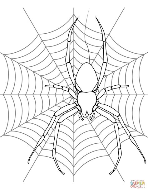 Spider On Its Web Coloring Page Free Printable Coloring