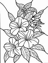 Coloring Pages Hibiscus Printable sketch template
