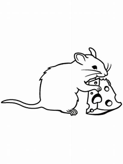 Rat Mouse Cheese Coloring Pages Lab Eating