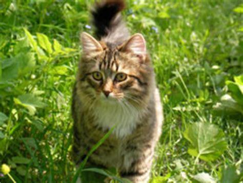 Katzen Vertreiben  Mit Diesen 8 Tipps Klappt's