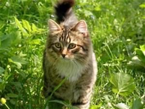 Katzen Garten Vertreiben : katzen vertreiben mit diesen 8 tipps klappt 39 s ~ Michelbontemps.com Haus und Dekorationen